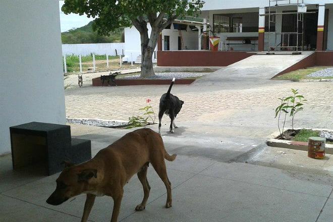 hospital veterinário pernambuco