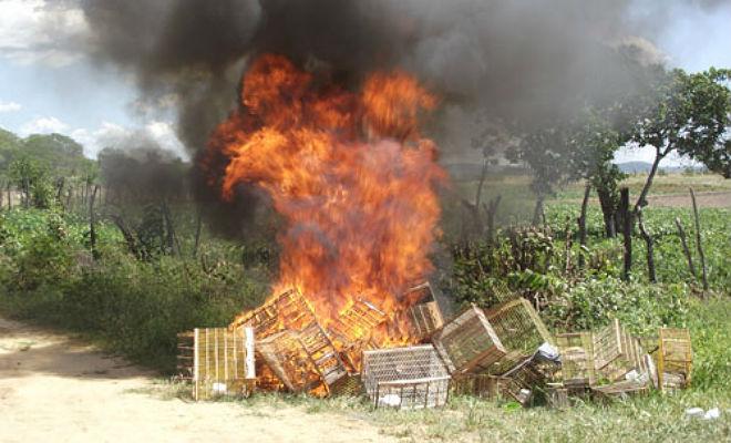 apreensao aves silvestres cprh pernambuco gaiolas queimadas