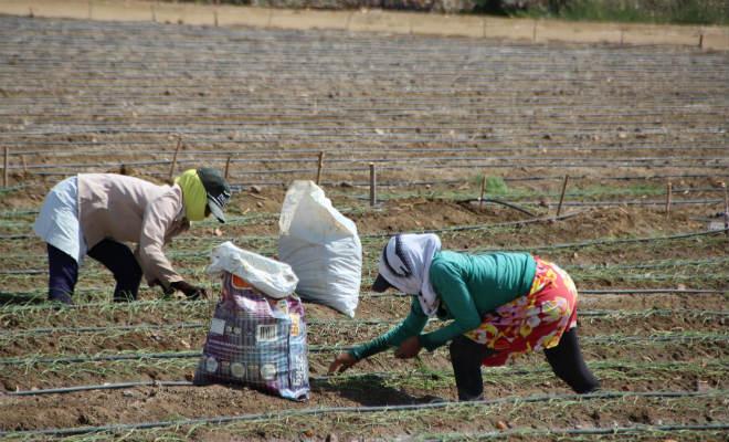 floricultura irrigada gestao da agua petrolina