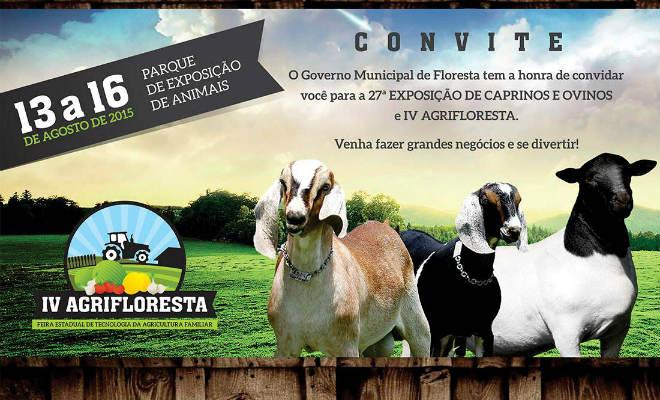 exposicao de caprinos e ovinos em floresta-pe pernambuco blog do elvis