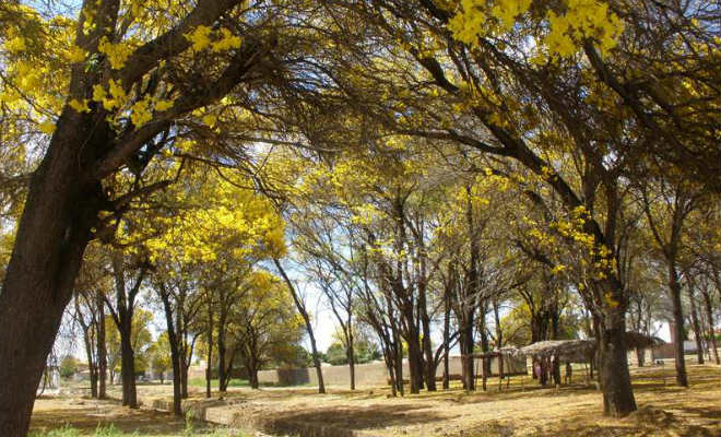 parque das caraibeiras em floresta pernambuco blog do elvis
