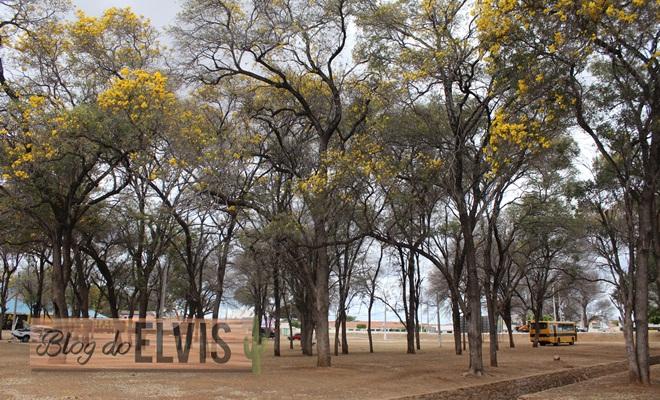 parque das caraibeiras em floresta no sertao de pernambuco (10)