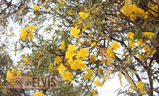 parque das caraibeiras em floresta no sertao de pernambuco (3)