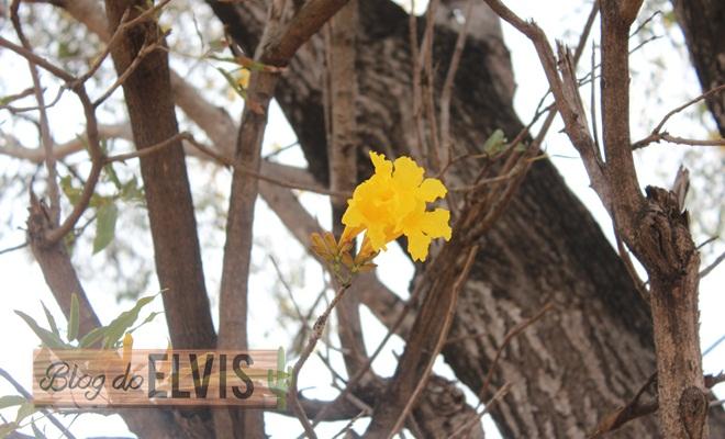parque das caraibeiras em floresta no sertao de pernambuco (4)
