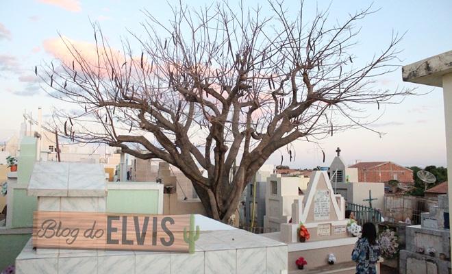 dia de finados no cemiterio de floresta-pe (10)