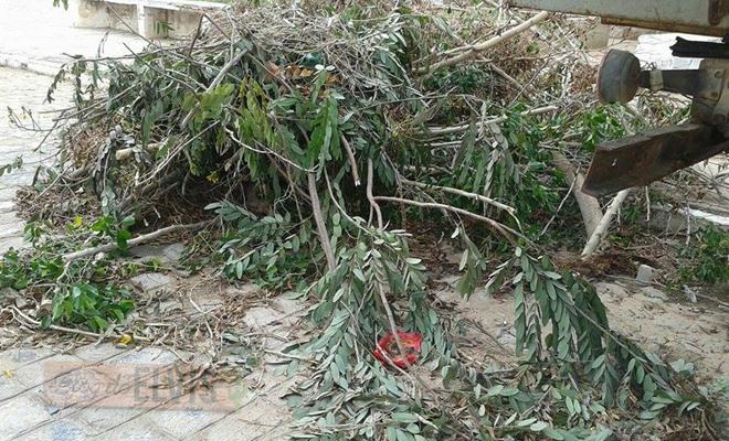 lixo acumulado na rua 15 de novembro em floresta-pe (1)