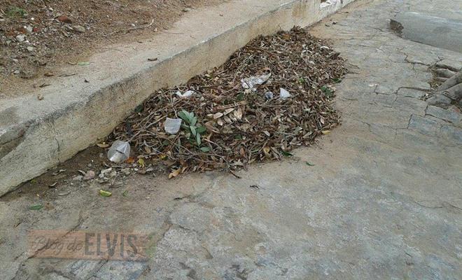 lixo acumulado na rua 15 de novembro em floresta-pe (5)